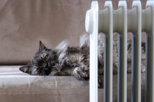 暖房の前のソファーでくつろぐ猫