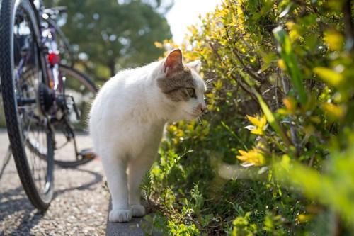 散策する猫