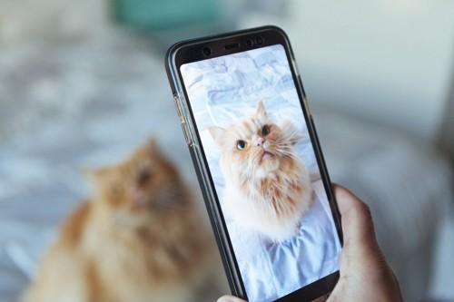 スマホで撮られる猫