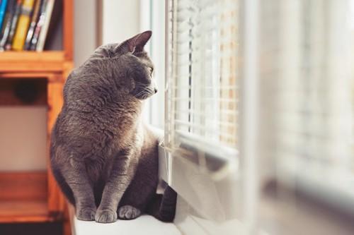 窓の外を眺めている猫