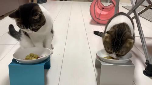 さつまいもを食べる猫と座る猫