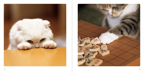 ねこのおてて写真集の将棋中の猫達