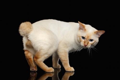 こちらを振り返る猫