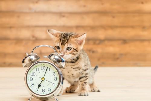 目覚まし時計と子猫