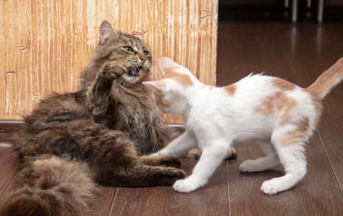 長毛の成猫と白い子猫