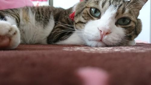 #悩む猫#