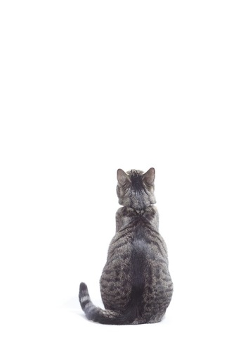座って上を見る猫の後ろ姿