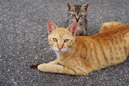 子を守る母猫