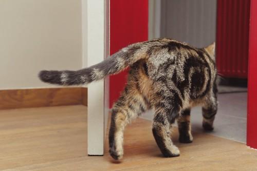 部屋の扉から出て行く猫