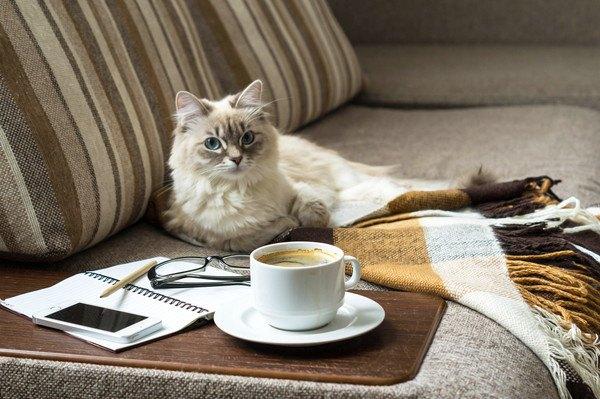 ソファに座る猫とノートとコップ