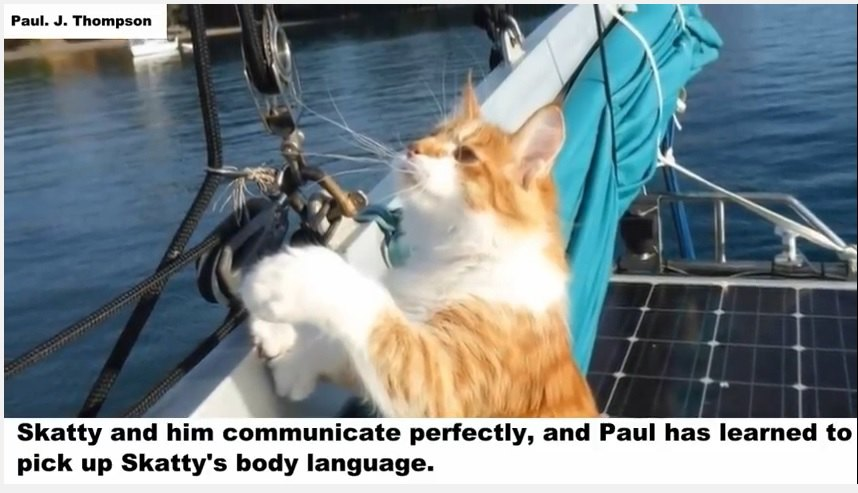 船の上の猫