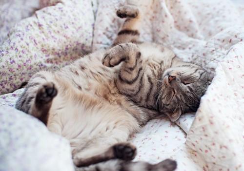 布団の上でヘソ天して眠る猫