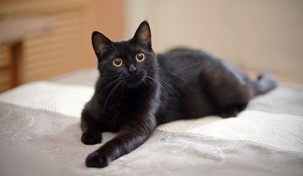 興奮している黒猫
