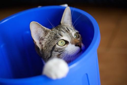 青いゴミ箱の中に入る猫