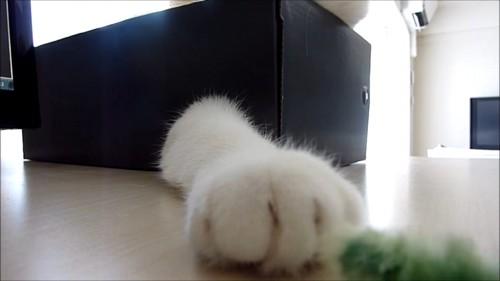箱から出てる猫の前足