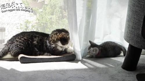 爪とぎに乗る成猫とカーテンに隠れる子猫