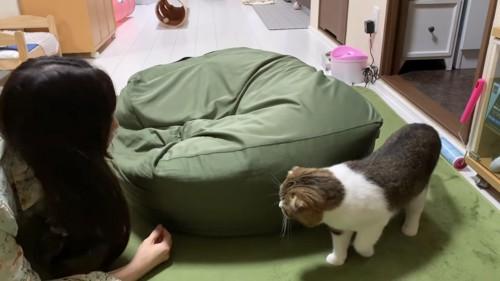 クッションの横に立つ猫