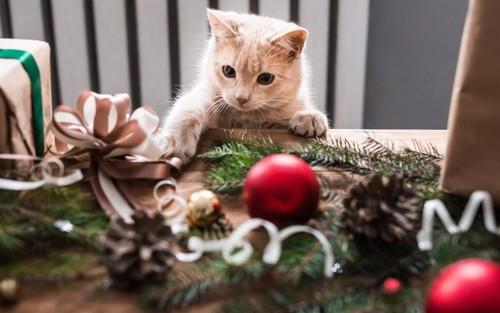 飾りを落とそうとする猫
