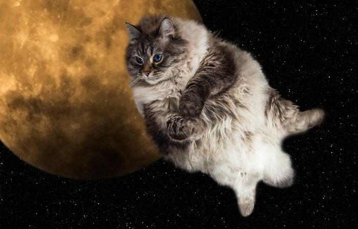 月の前を横切り宇宙を飛ぶスペースキャット