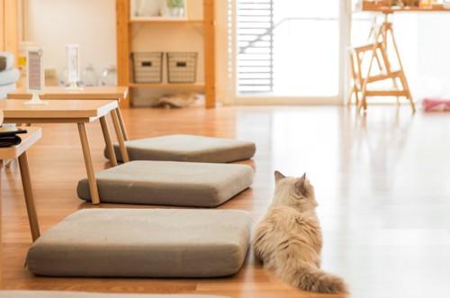 リビングで座布団の隣でくつろぐ猫