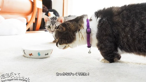 お皿に近づく2匹の猫