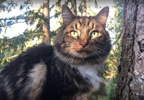 571匹目に救助された猫