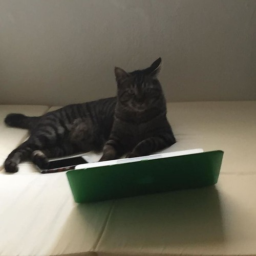 パソコン 猫