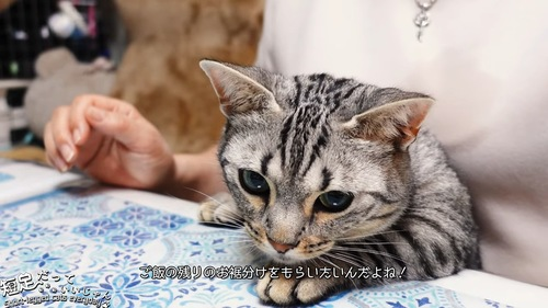 テーブルのに前足を乗せる猫