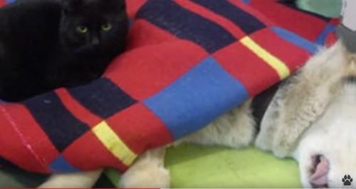 犬に寄り添う黒猫