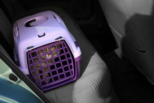 車に乗っているキャリーバッグに入った猫