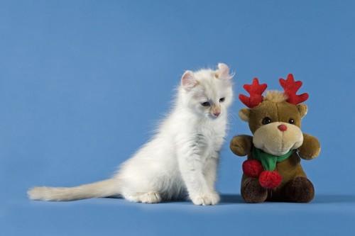 トナカイのぬいぐるみのそばに座るアメリカンカールの子猫