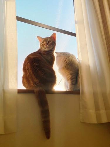 窓際で暖を取る猫