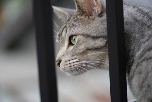 フェンス越しに外を見る猫