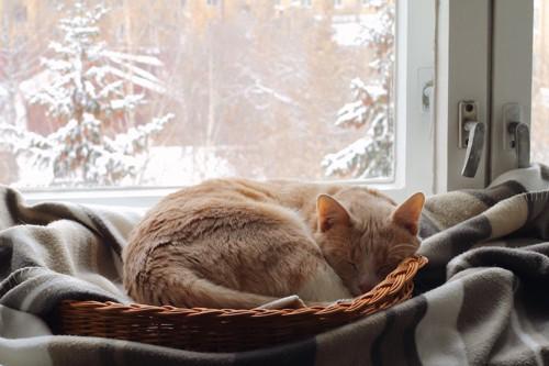 窓辺に置かれた猫用ベッドで眠る猫