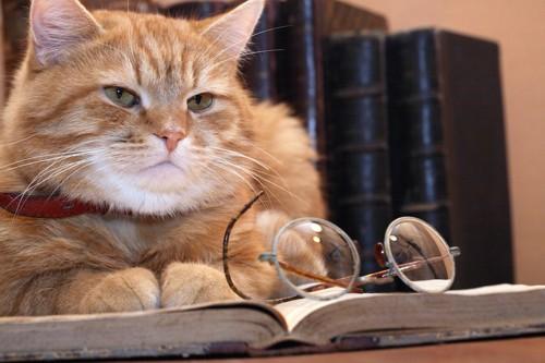 古い本の上でくつろぐ猫