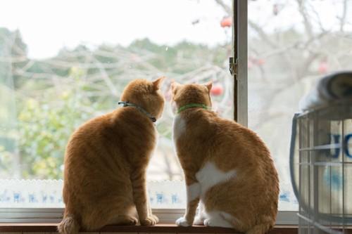 窓の外を見ている2匹の猫