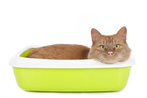 猫用トイレに座り込む猫