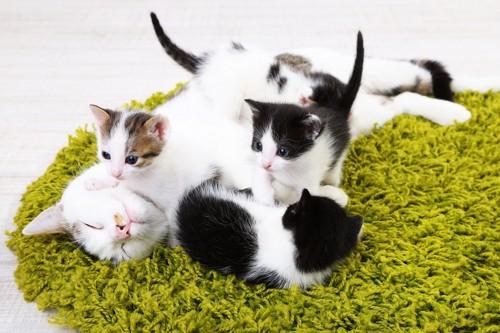 尻尾を立てて母猫に寄っていく子猫