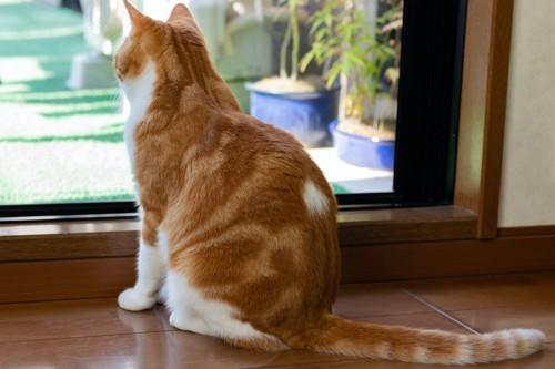 座って窓の外を見つめる茶白猫の後ろ姿