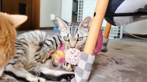 ボールを捕まえている猫
