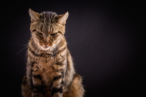 寂しそうにうつむいて座る猫