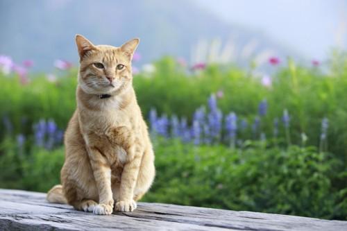 花畑にたたずむ猫
