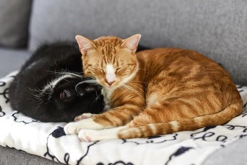 ソファーでくつろぐ二匹の猫