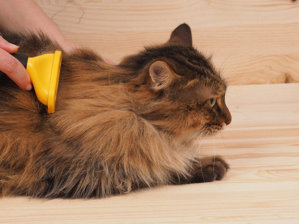 ファーミネーターをされる猫
