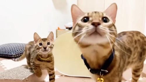 見上げる2匹の猫
