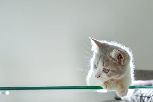何かを見ている子猫