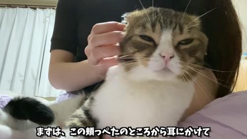 頬をなでられる猫