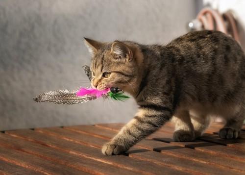 おもちゃを咥えて歩く猫