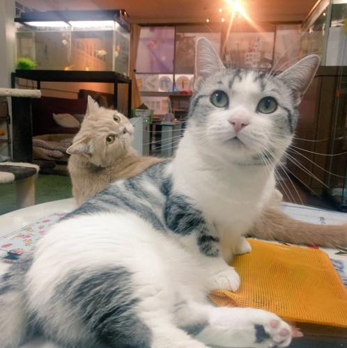 保護猫カフェの猫ちゃん