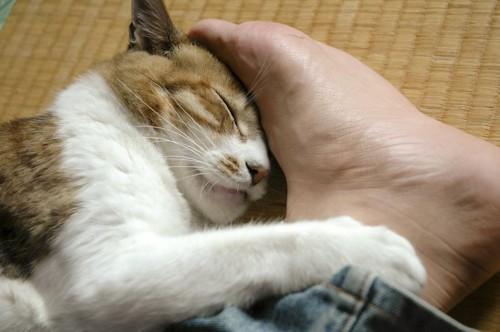 飼い主の足を掴んで眠る猫